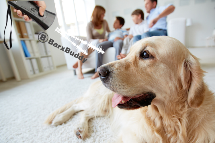 Peaceful Home Guide: 6 Reason Why Dog Owners Love BarxBuddy So Much
